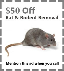 Rat Removal Coupons -